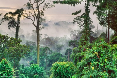 Tropical Forest, Borneo (source: National Geographic)